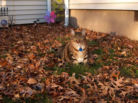 Cat Glamour