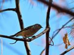 The Elusive Warbler