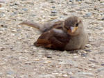Baby Sparrow's TO