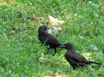 It's Grackle Time!