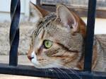 Kitty Curiosity