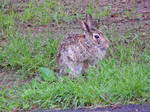 Rabbit Poise