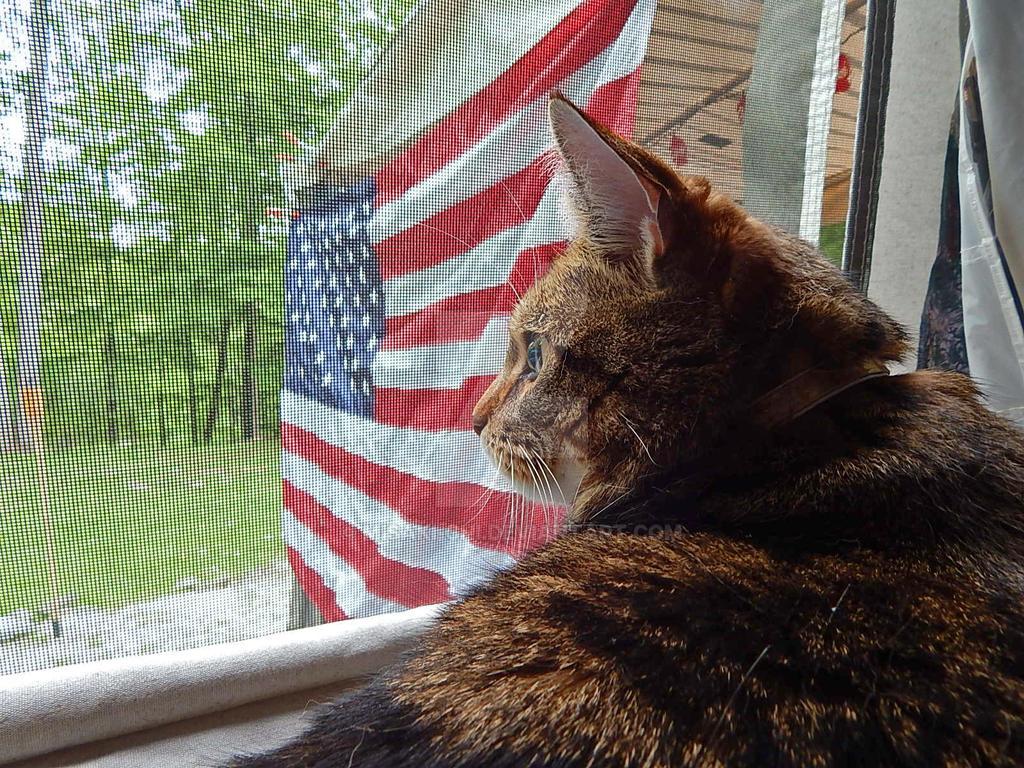 Patriot Cat Pepper