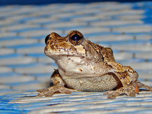 Prince or Frog