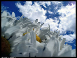 Dreaming Daisies. by jewelzbud