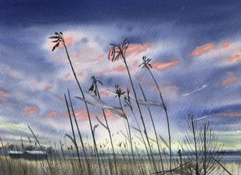 Reeds by Marhelf