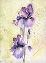 Irises-2 by Marhelf