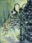 Philadelphus and Lamps