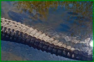 Colorado Gators 2011-10-15 57-SM by ByLagarto