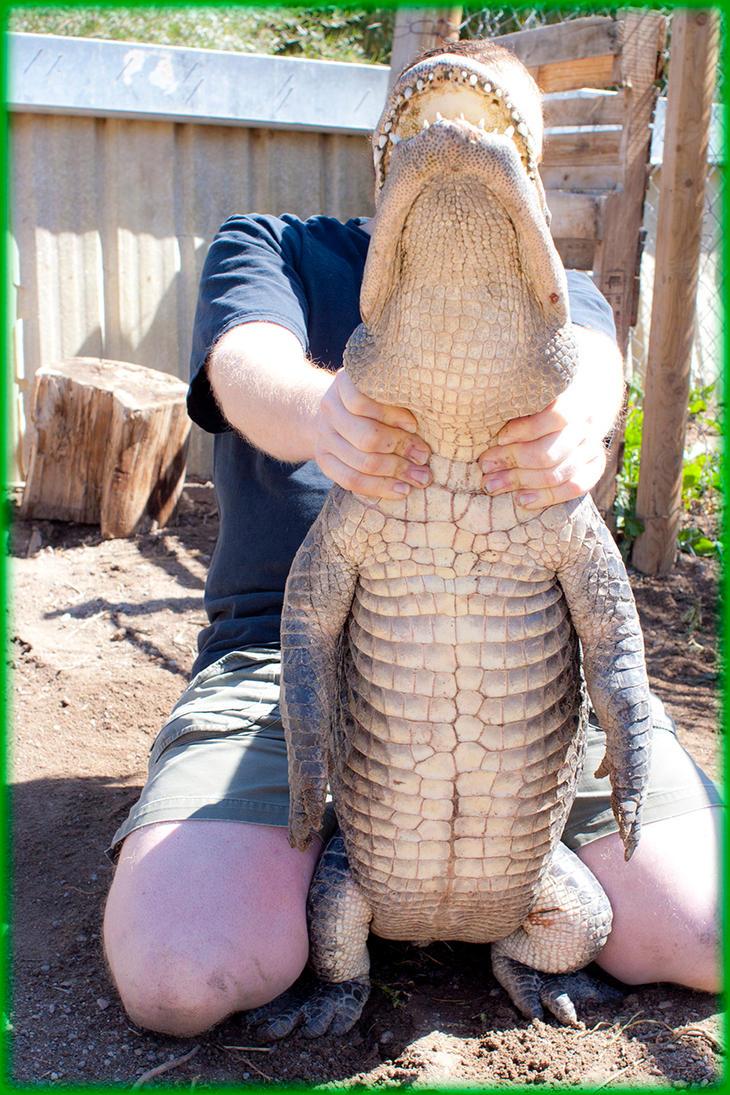 Colorado Gators 2011-09-18 171 by ByLagarto