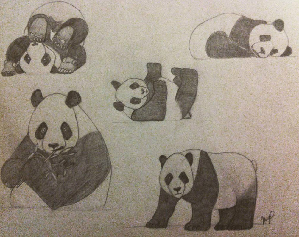 Panda collection pencil drawing by insaniejanie808 on deviantart