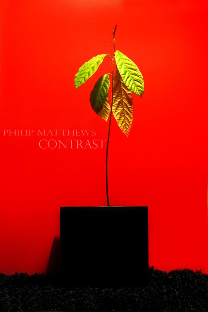 Contrast by PhilipMatthews