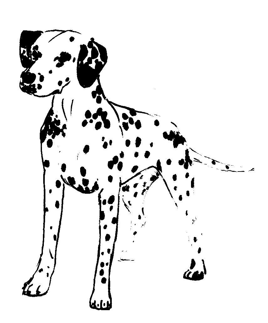 Dalmatian Outline Coloring Pages download batman images coloring pages