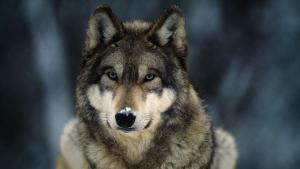 benlonewolf93's Profile Picture
