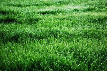 Fresh grass by Roserud