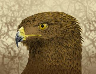 Eagle by NefarusYul