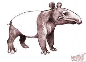 Tapir by rgyoung