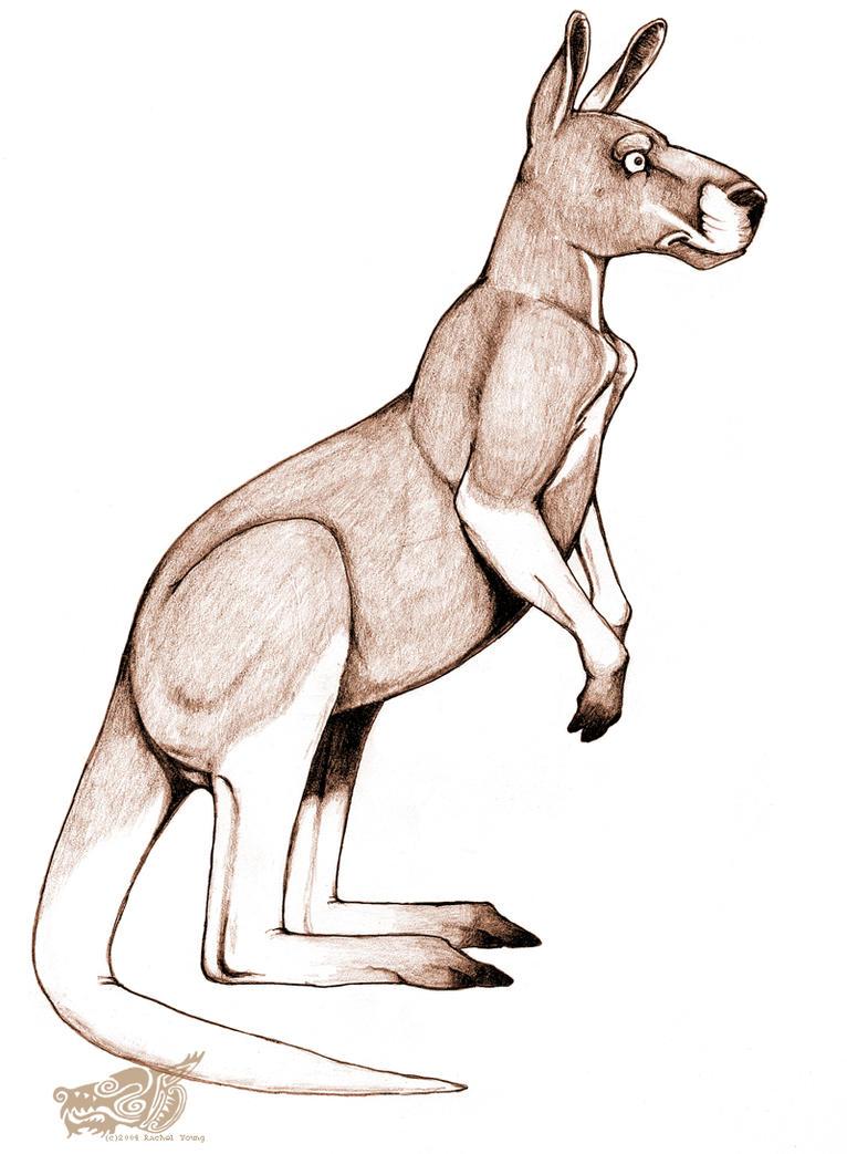 Red Kangaroo by rgyoung