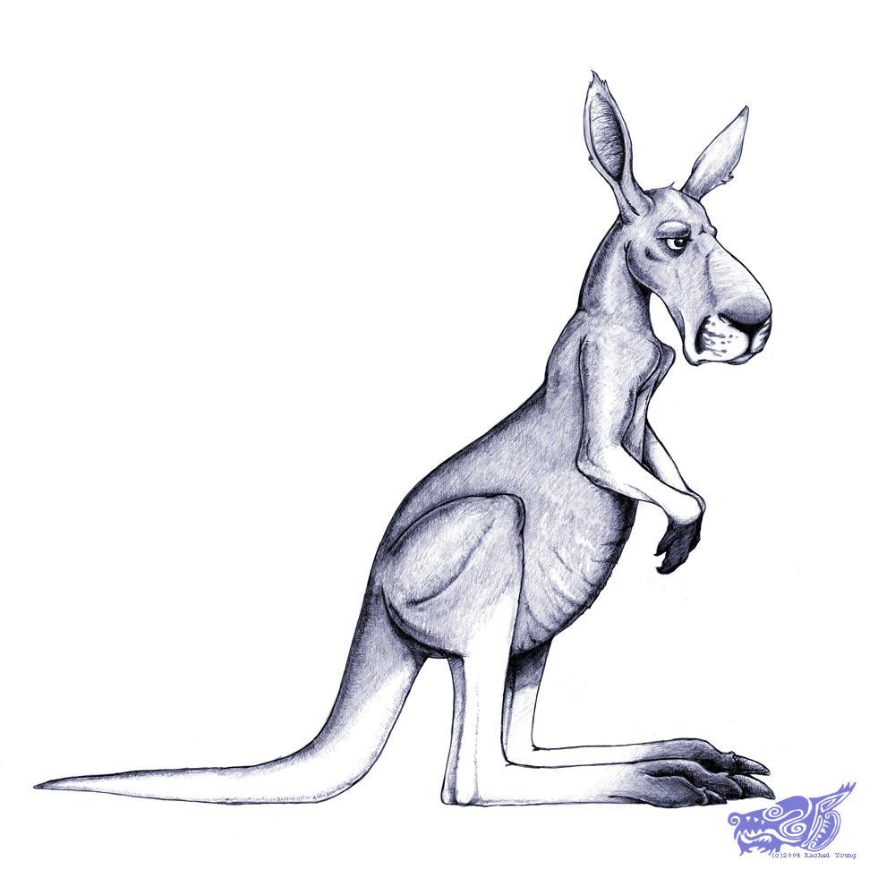 Red Kangaroo Redux by rgyoung
