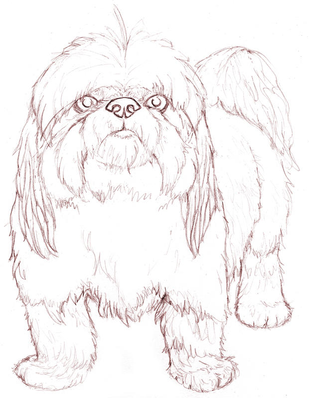 Shih Suh Free Colouring Pages Shih Tzu Coloring Pages
