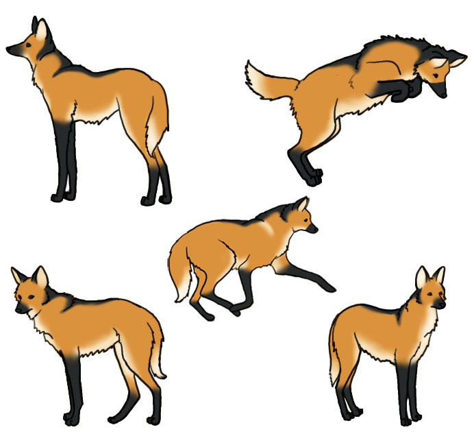 How To Draw A Maned Wolf: Maned Wolf By Atroxa On DeviantArt
