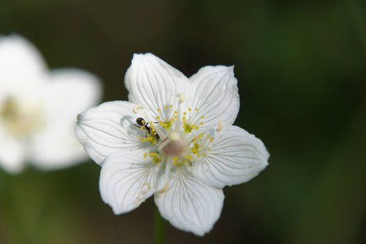 Tiny White