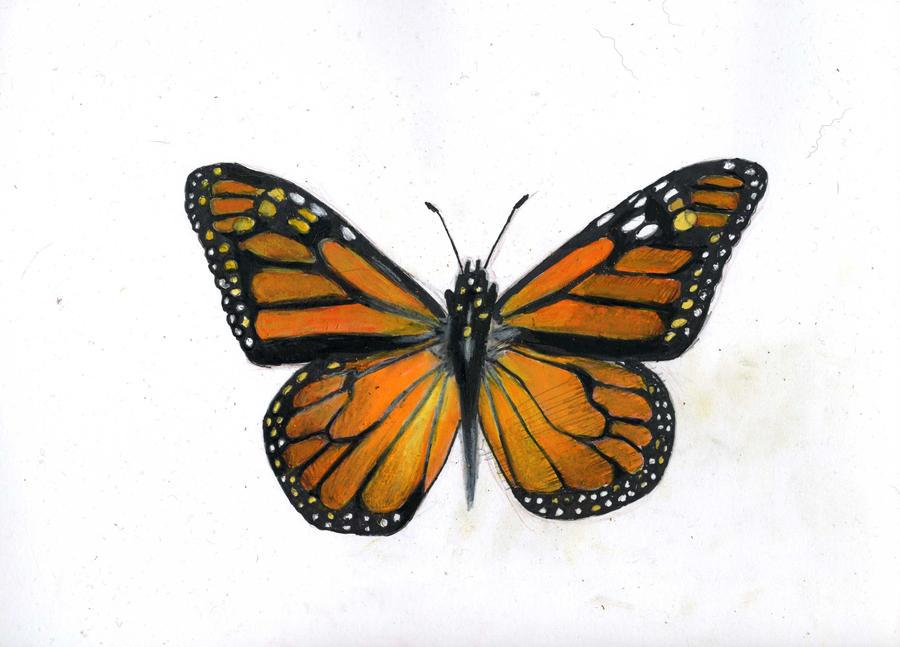 How to Draw Butterfly Video on Kazanjianm YouTube