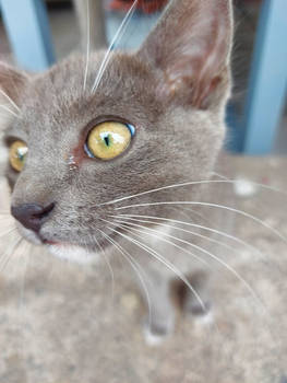 Curious Kitten 2