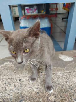 Curious Kitten 3