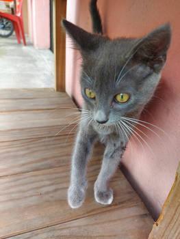 Curious Kitten 4