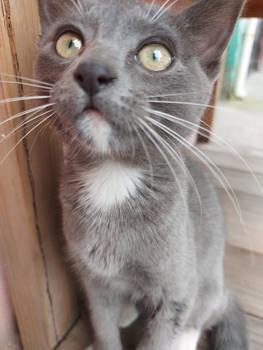 Curious Kitten 7