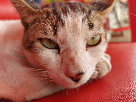 Sleepy cat 3