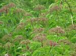 purple flowers or weeds by debh945