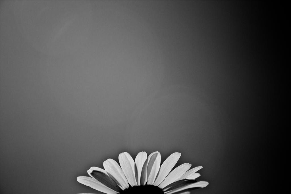 Black n white flower wallpaper by luckysam444 on deviantart black n white flower wallpaper by luckysam444 mightylinksfo
