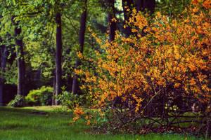 Yellow Flowers by ZahrahLeona