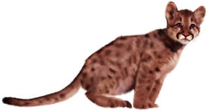 Cougar Cub by Sandusky78