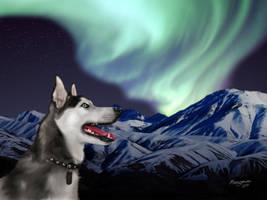 Husky Lights by Sandusky78