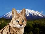 Serval Summit