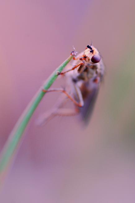 Lonely green by Svennovitch