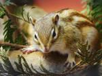 Chipmunk by LanniePossum