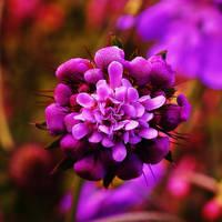 Flower 10 by LanniePossum