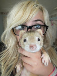 Lady Penelope Porkchops by LanniePossum