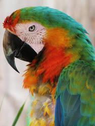 Catalina Macaw by LanniePossum