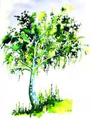 birch by rionka