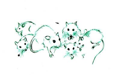 .studies of rat noses