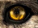 fox in wolf