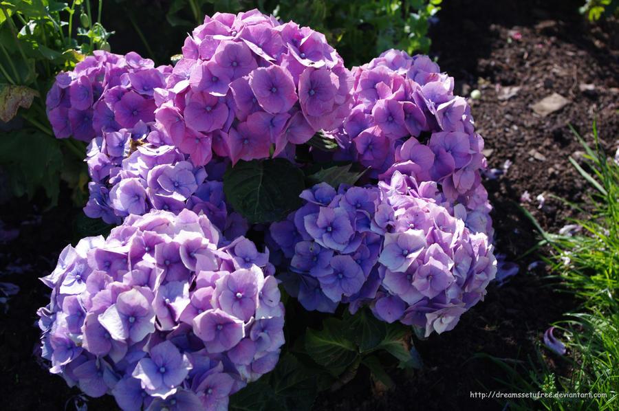 Burst Of Purple by dreamssetufree