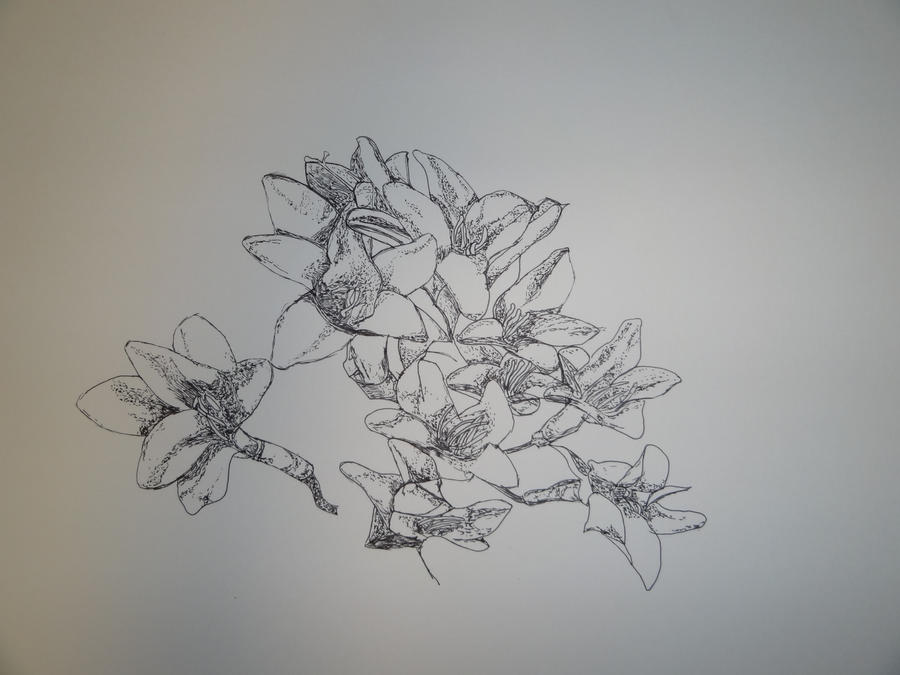 Traditional Flower Line Drawing : Flower line drawing 2 by dreamssetufree on deviantart