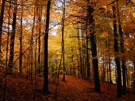 fall by paupah