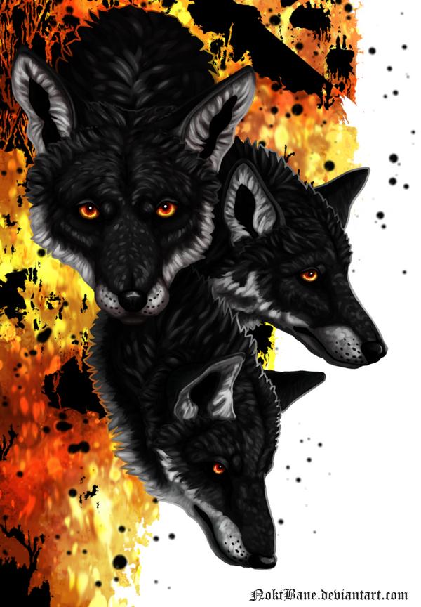 Tri Fox by NoktBane